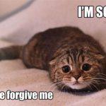 Kiedy przepraszam to za mało