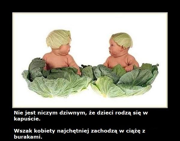 dzieci rodzą się z kapusty z burakami
